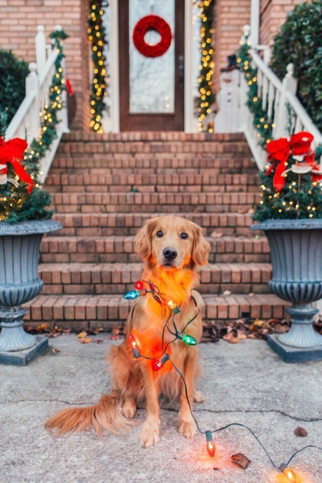 #ChristmasEveEve  Love & peace  🍀😄😍🐶🐾🍀 📷 Pic #Pets #PAWS #BIZBoost #THISHappened