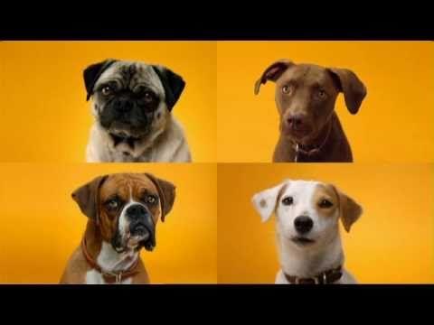 Pedigree Chum Doggy Dentures Doggy Animals Friends Dentures