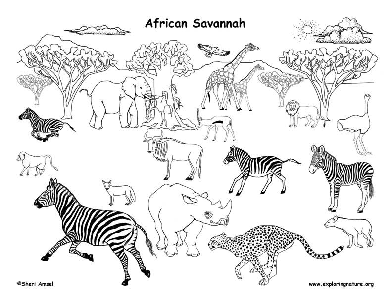 Draw An African Grassland African Animals Animal Coloring Pages African Lion