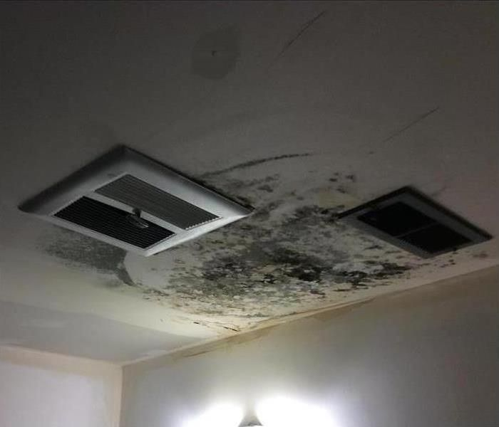 This is a picture of a black mold Stachybotrys chartarum job done