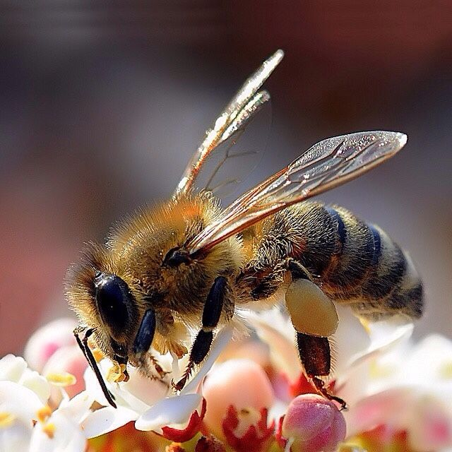 Http Simply Beautiful World Tumblr Com Post 117248687002 Bienenprodukte Bienen Insekten