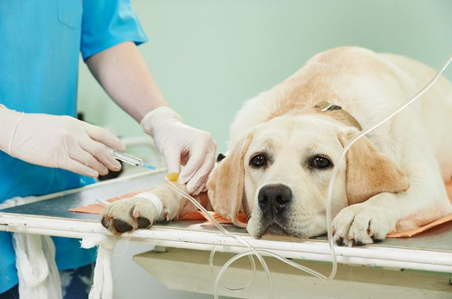 What To Do When Making A Dog Insurance Claim Dog Insurance