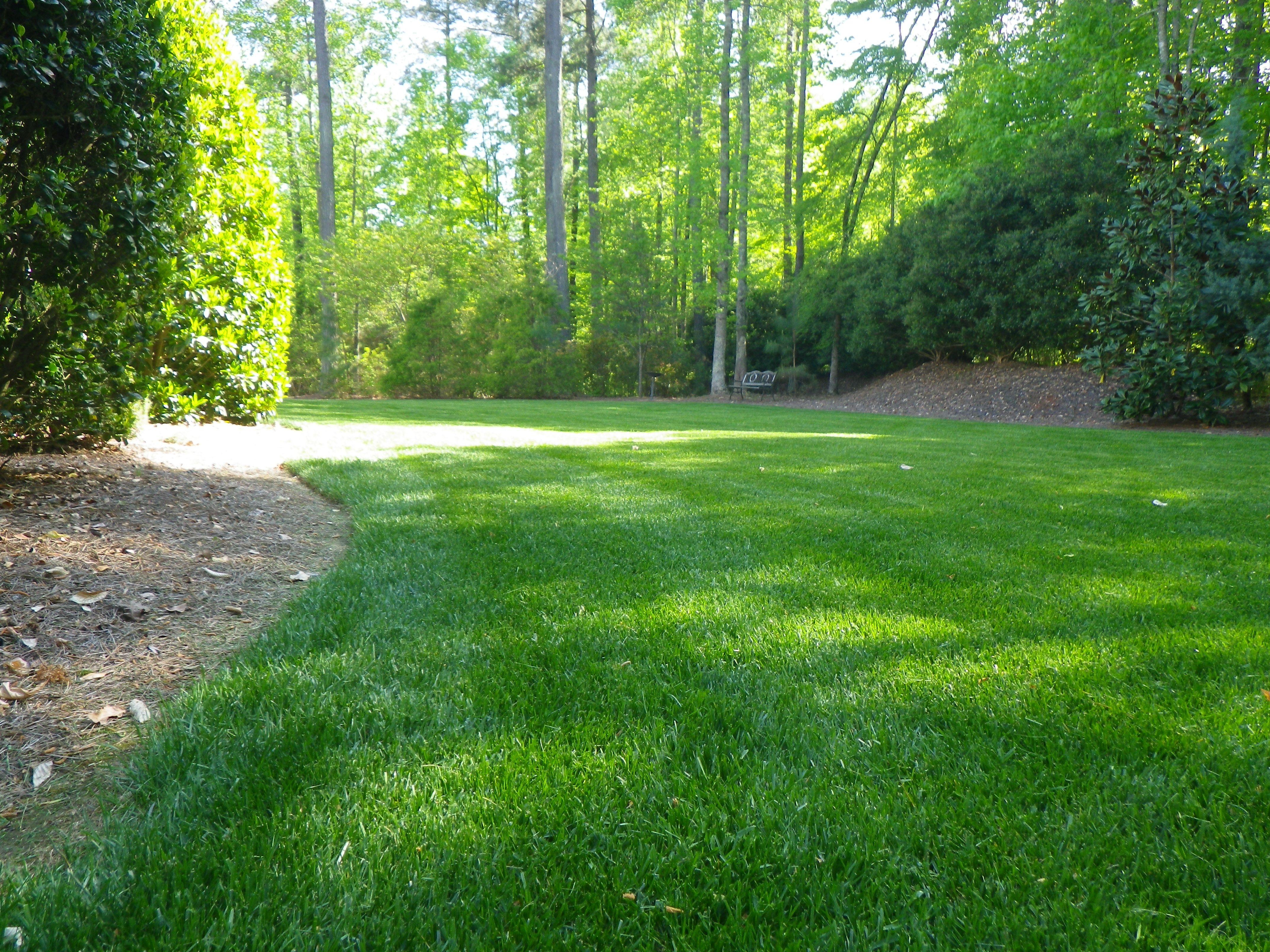 Zoysia Grass Zoysia Sod Grass Atlanta Ga Ground Cover Plants Shade Fescue Grass Fescue Grass Lawn
