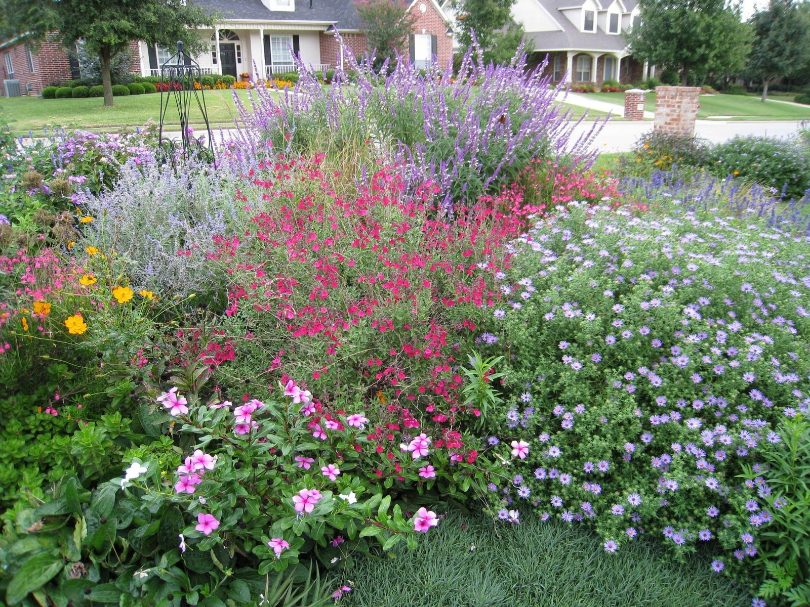 Salvia greggii with Mexican Bush Sage, Fall Aster, Russian