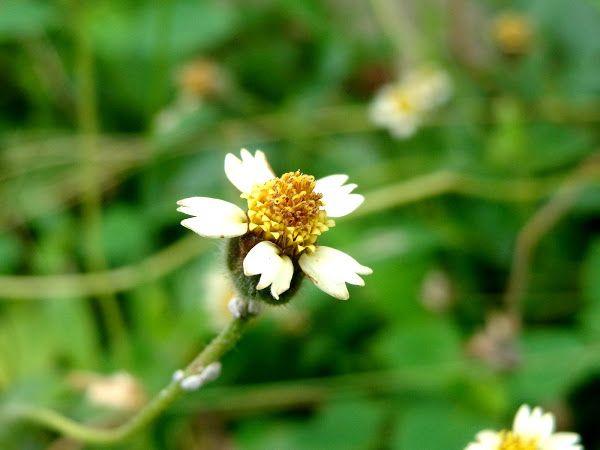 Coat Buttons Ghamra Flower Photos Landscaping Plants Landscape