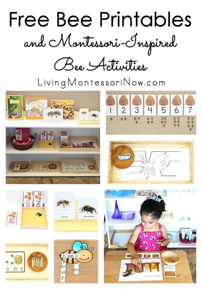 Free Bee Printables and Montessori-Inspired Bee Activities ...