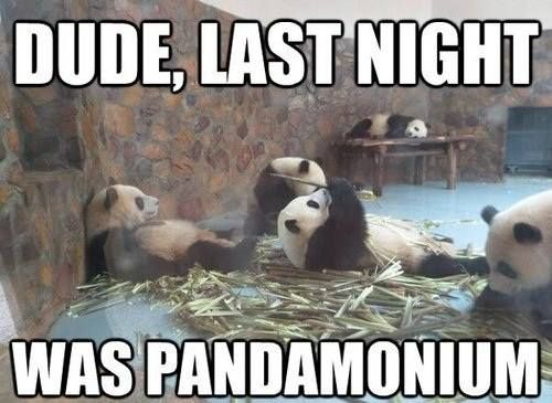Funny Panda Picture Friday Funny Pictures Funny Wild Animals