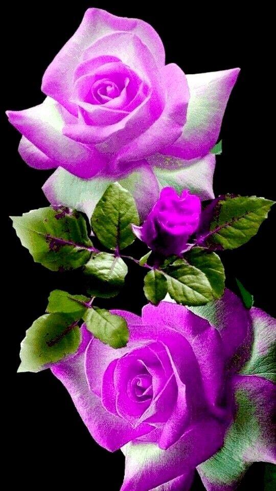 Пин от пользователя Нина на доске Растения | Красивые розы ...