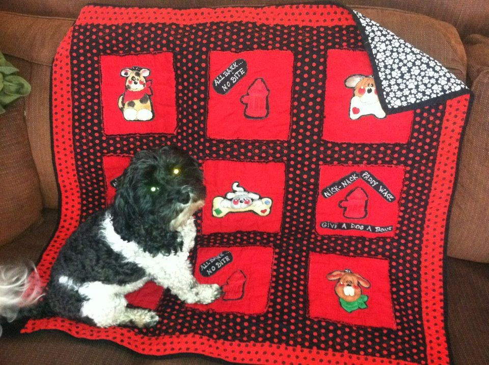 Mr Pooter loves his new quilt!!