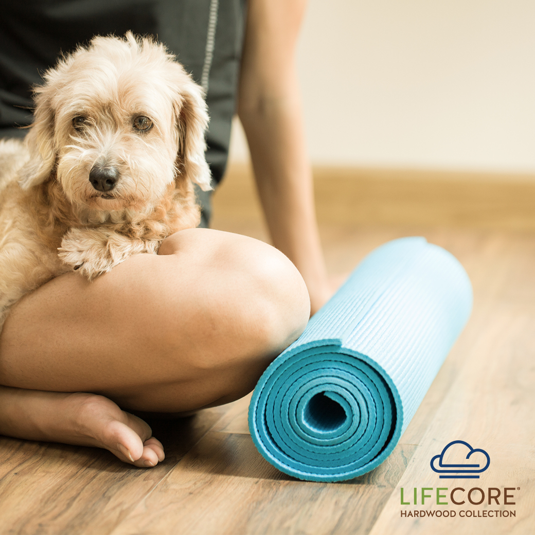 Hardwood Flooring for Allergies & Asthma Sufferers Pet