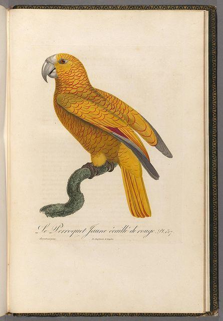 Histoire naturelle des perroquets t.2