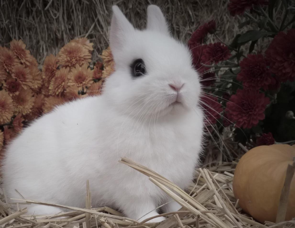 Tavşan 4 Hayvanlar Pinterest Tavşanlar Hayvan Resimleri Ve Hayvan