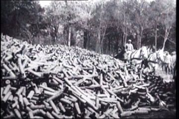 Mountains of spent shell casings accumulate as the battle of verdun mountains of spent shell casings accumulate as the battle of verdun goes on for 10 agonizing publicscrutiny Image collections