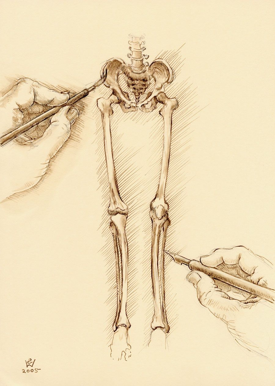 Drawing Lower Limb Bones... | Sketch Styles and Techniques ...