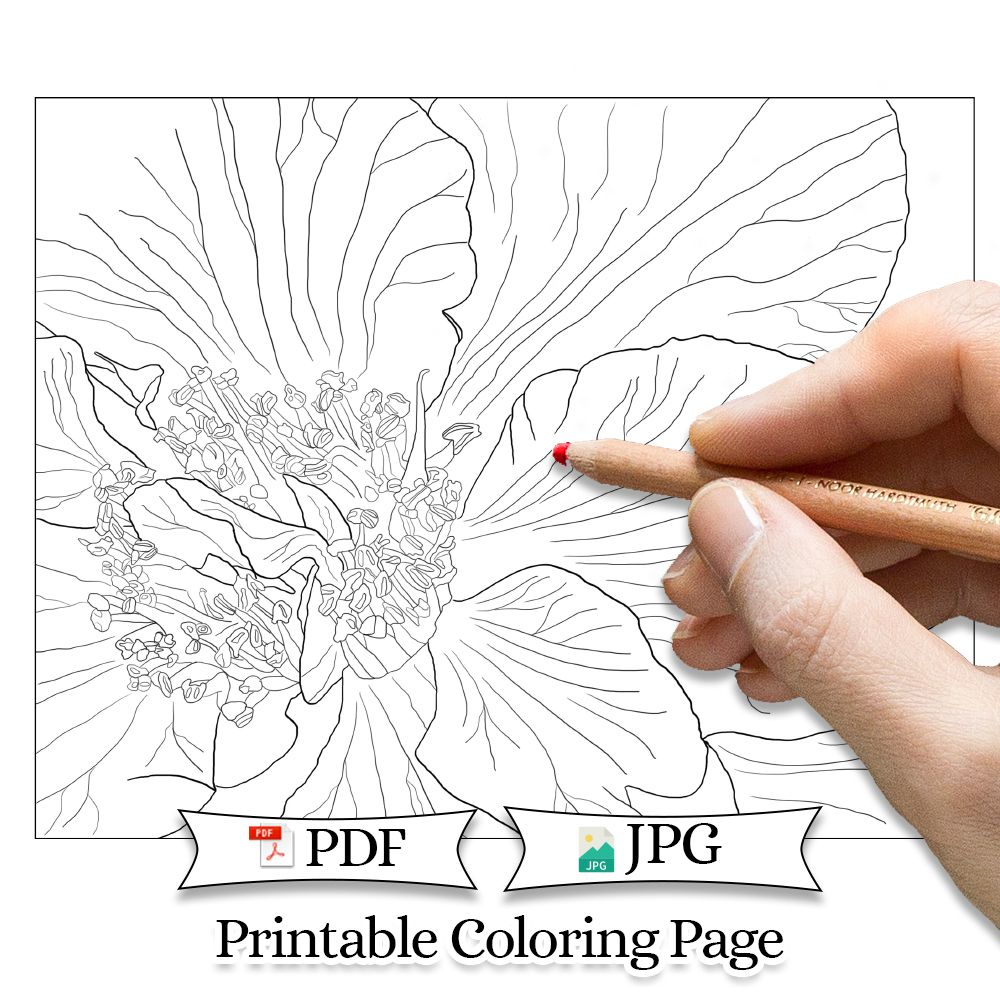 Camellia Adult Coloring Page Printable