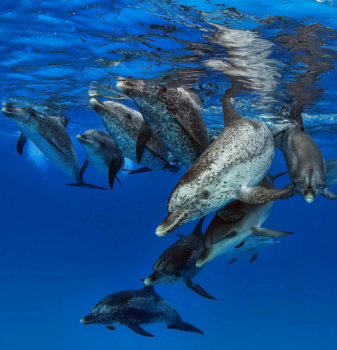 Pin by Keri U on Dolphins o), they need their own board