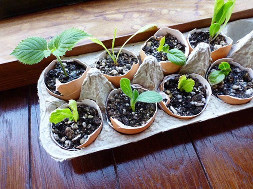 Starting Seeds in Eggshells by Garden Betty - DECOmyplace - Home decorating ideas, Interior styling, 居家佈置,收納,手作,家具,裝潢,木工,沙發,鄉村風,北歐風,舊屋改造,室內設計