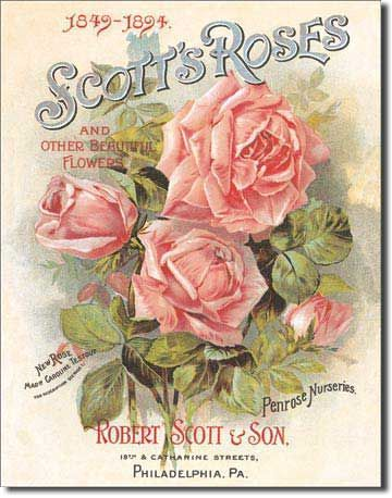 PosterHunt.com - $18.90 - TIN SIGN : SCOTT'S ROSES
