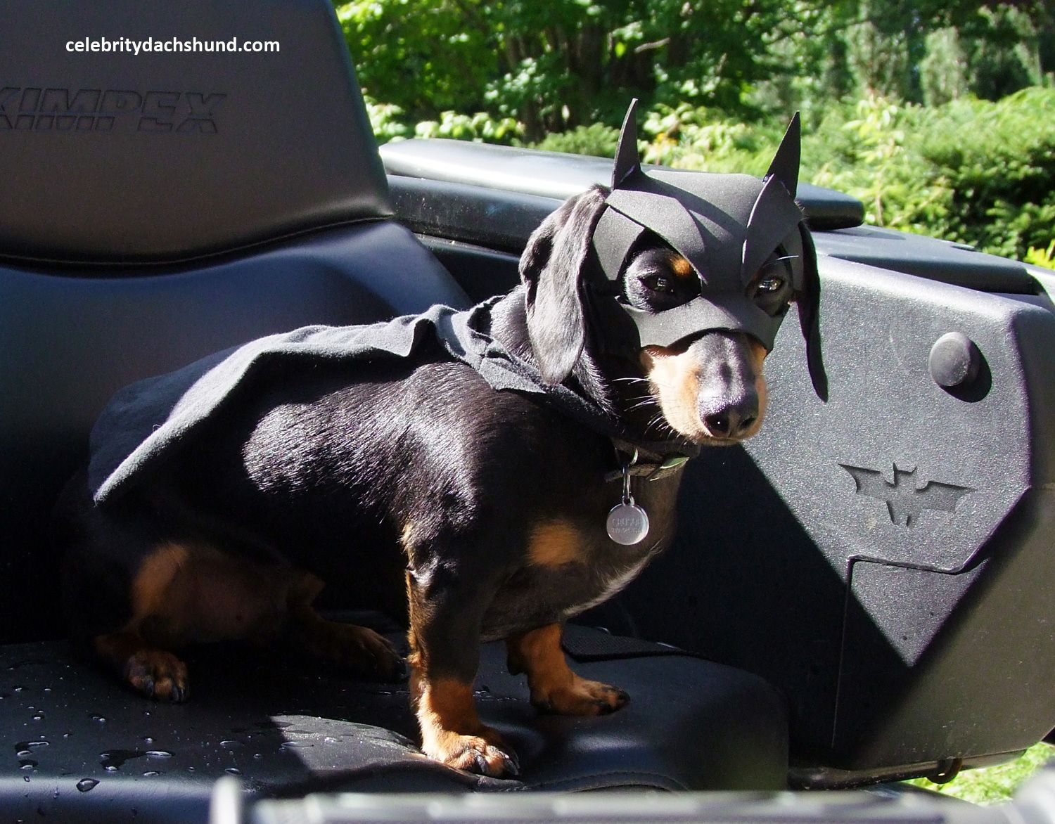 Batdog Is Here Click To Read My New Post Dachshund Halloween