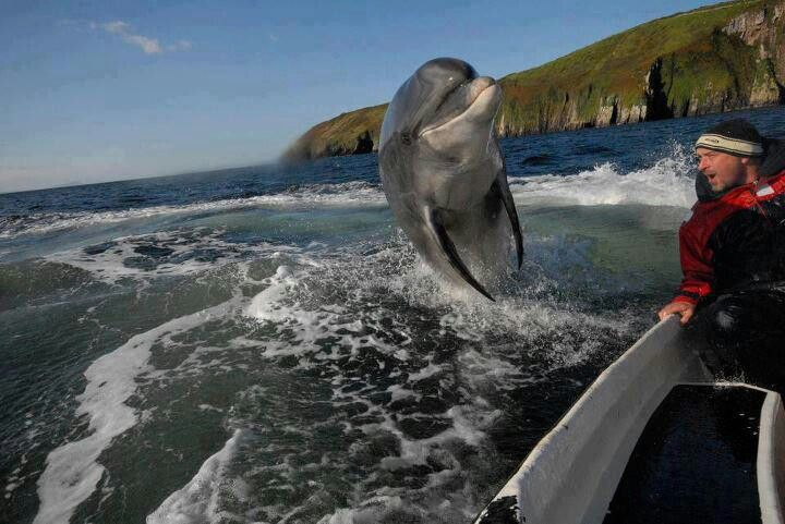 Amazing Dolphin Saying Hello Dolphin Memes Animals Beautiful Dolphins