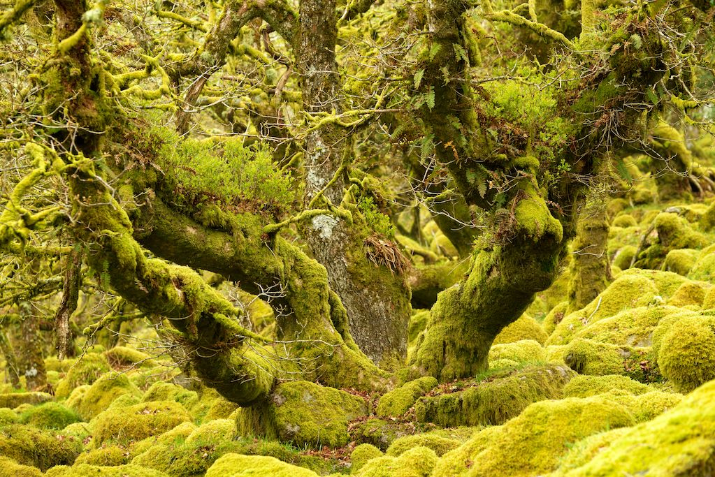 Photograph Green Domain by duncan george on 500px