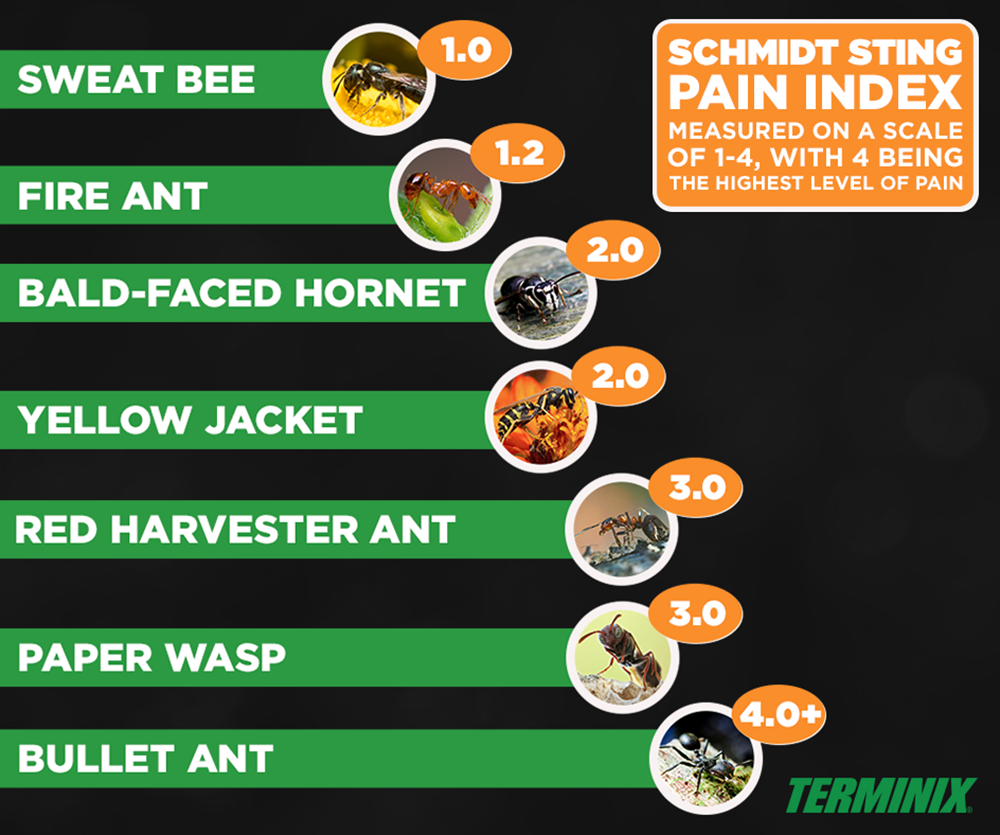 Pin on What's Buzzing With Terminix?