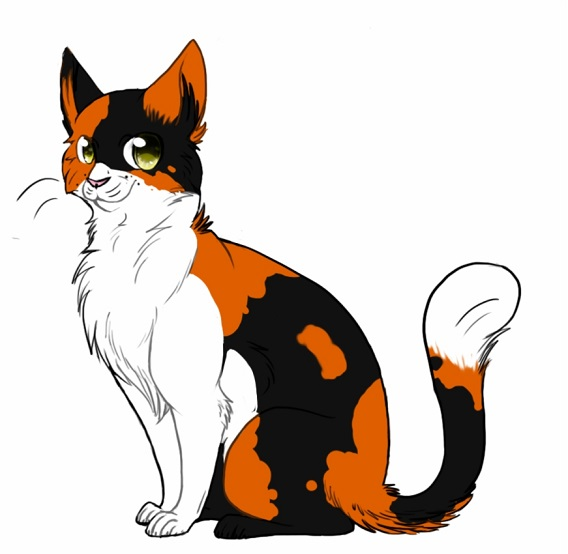 Lovely cat with a loving smile, how to draw with color. drawing sketch drawing