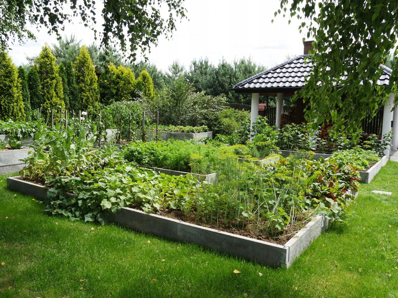 Warzywnik Betonowy Inspekt Skrzynka Na Warzywa 7288844284 Allegro Pl Eco Garden Garden Vegetable Garden