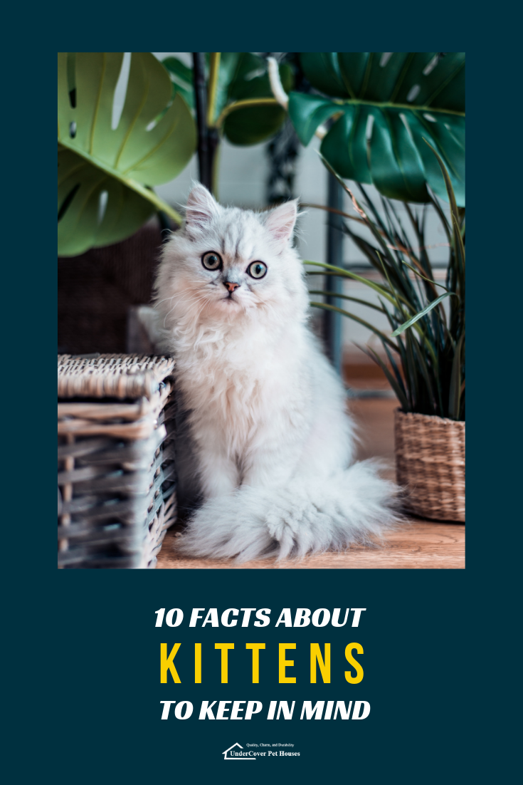 10 Facts About Kittens To Keep In Mind Kittens Cat Parenting Cute Cats Photos