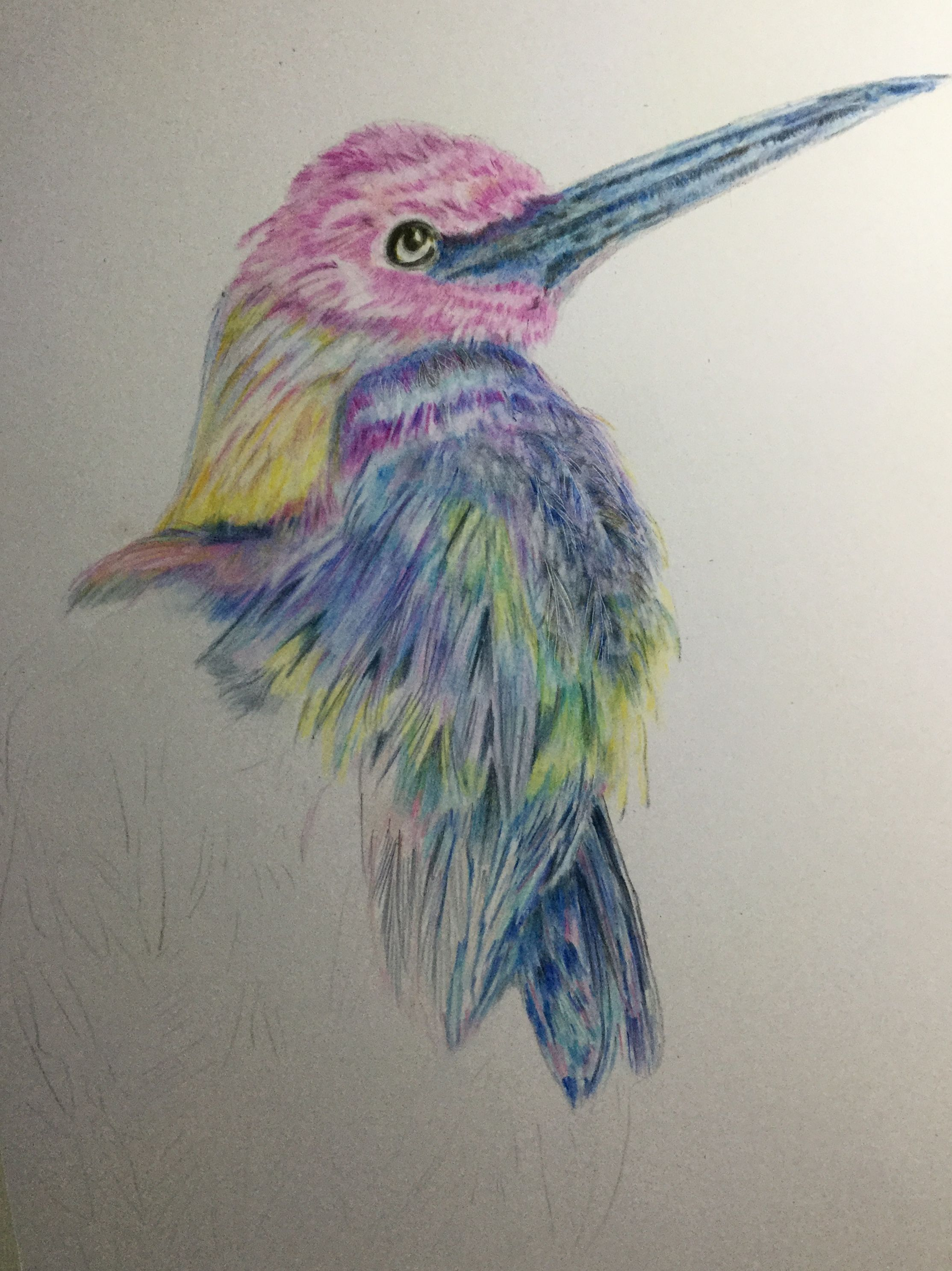 Creative coloured pencil drawing of heron wip color pencils