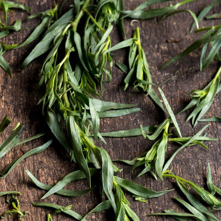 Is Tarragon Really The King Of Herbs Herbs Healing Herbs Canker Sore