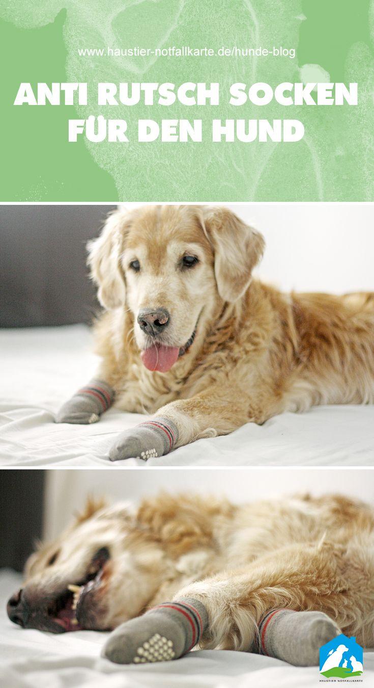 Warum Anti Rutsch Socken Fur Hunde Wahre Helden Sind Anti Rutsch