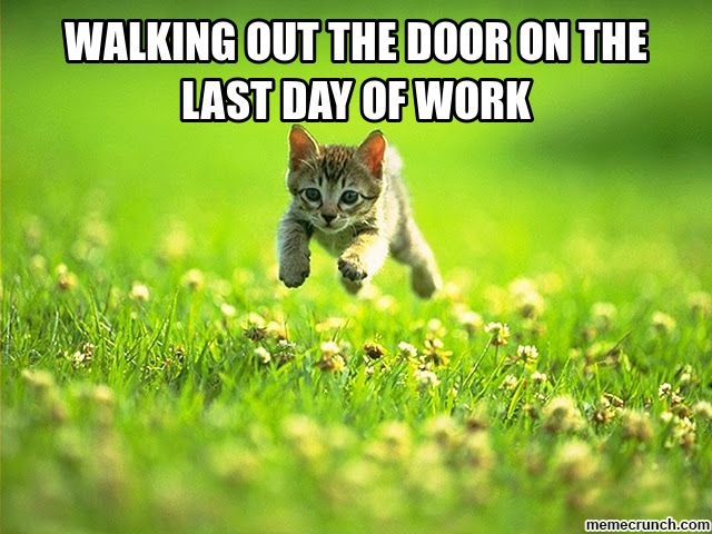 Last Day Of Work Memes Image Memes At Relatably Com Kitten Animals Cats