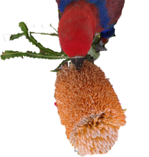 Safe and Toxic List for Parrots