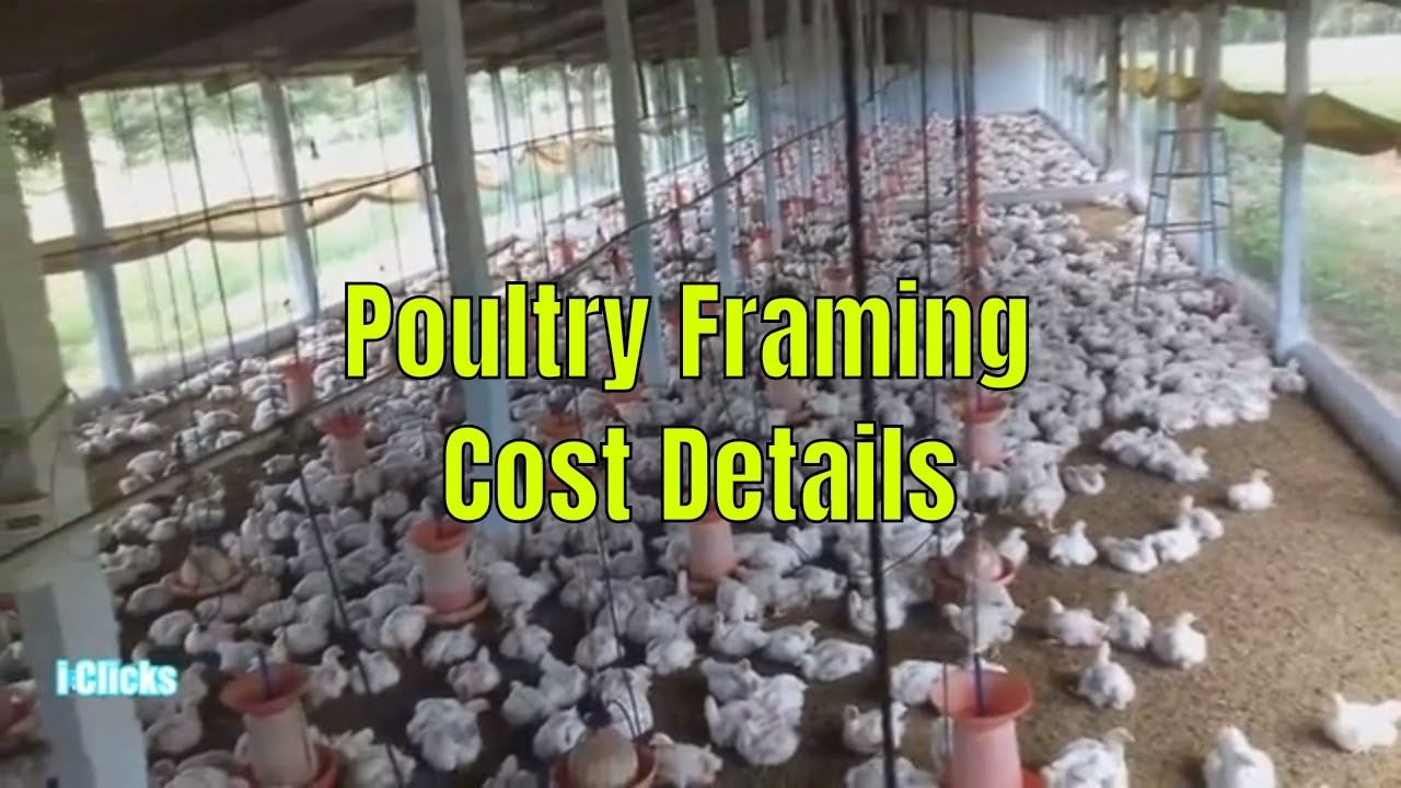 Broiler Poultry Farm Project Cost Details in Easy Way