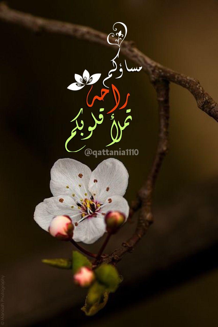 مساؤكم راحة تملأ قلوبكم مساء الخيرات Beautiful Morning Messages Good Evening Wishes Evening Greetings