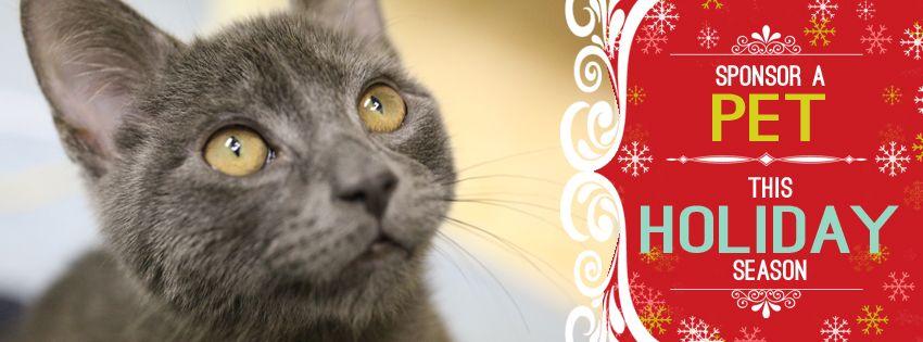 Sponsor a Pet this Holiday Seasons www.secondchancenc