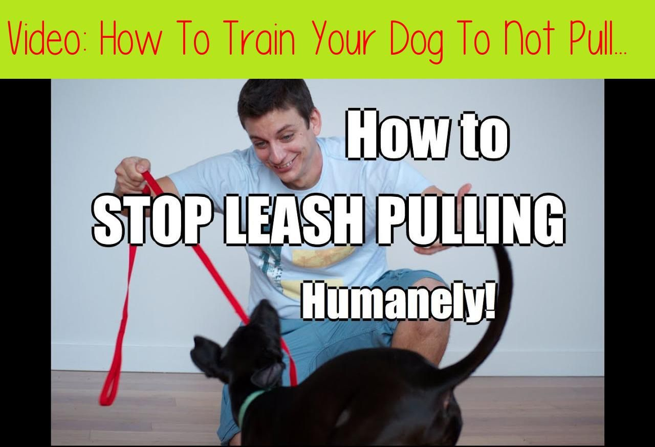 How To Train Your Dog To Not Pull On The Leash Teaching Your Dog