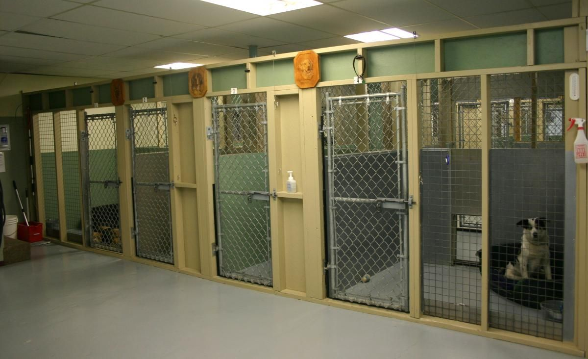 Pound Adoption Centre Victoria Animal Control Services Dog Boarding Kennels Dog Boarding Dog Kennel