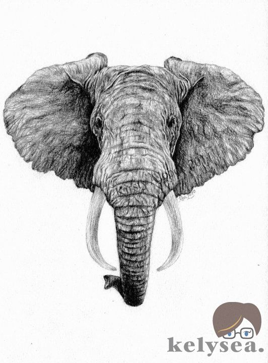 how to draw a realistic elephant face