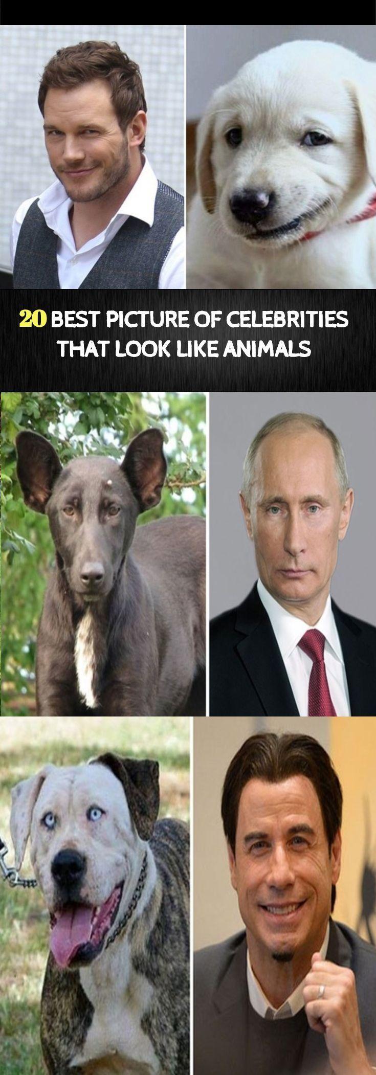 14++ Animals that look like celebrities ideas in 2021