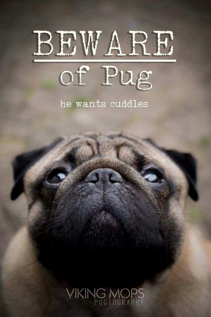 Suitcases Pug Lovers Quotes Pugs Funny Cute Pugs