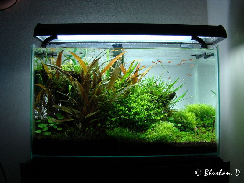 Quot Boraras Dream Quot 10 Gallon Aquascapes Aquarium Fish