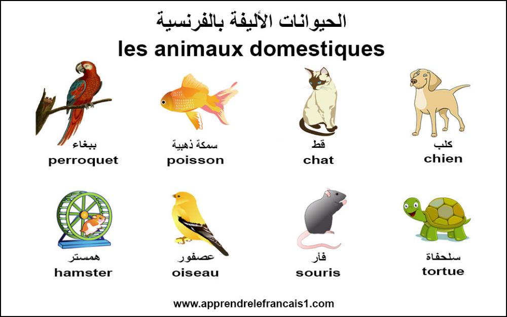 الحيوانات الاليفة بالفرنسية بالصور Comics Peanuts Comics Art