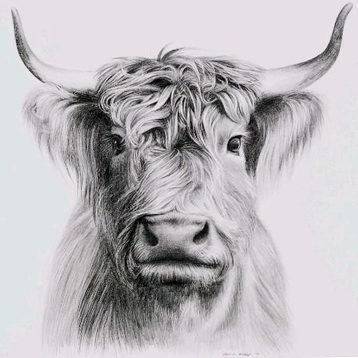 WATCH THIS: Pencil drawing of a cow