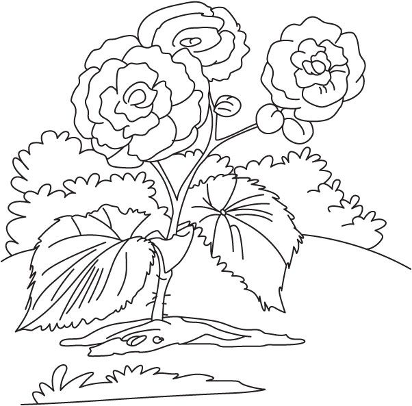 Yellow Begonia Coloring Page Art Kit Floral Illustrations