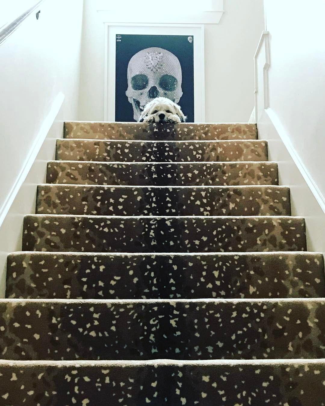 Best Sally Wheat Interiors Antelope Carpet Stair Runner 400 x 300