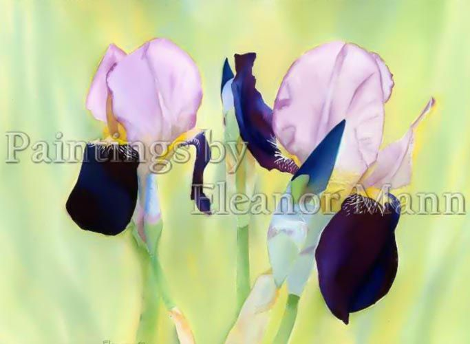 Purple Iris - a watercolour painting on Bockingford watercolour paper for sale by the artist, Eleanor Mann.