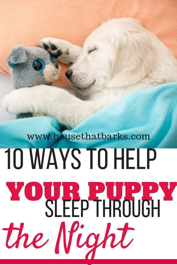 10 Fun Facts How To Get Your Puppy To Sleep Through The Night Sleeping Puppies Dog Potty Training Puppy Training