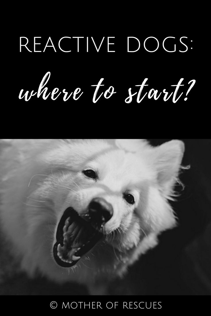 Getting Started With Your Reactive Dog 5 Important Steps You Must
